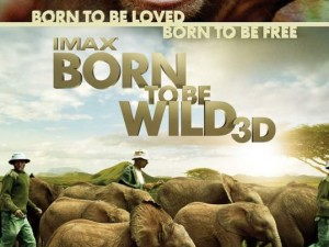 born-to-be-wild poster